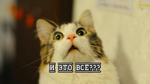 кошка удивлена