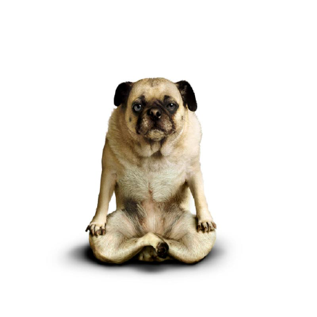 собака в позе йога