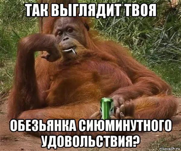 невоспитанная обезьяна