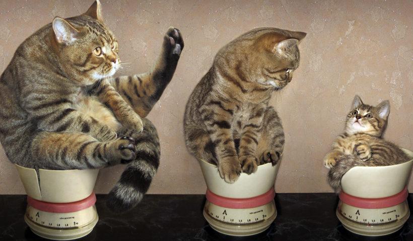 Кошки в кувшине